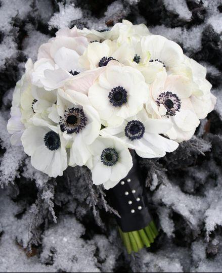bella fiori anemone