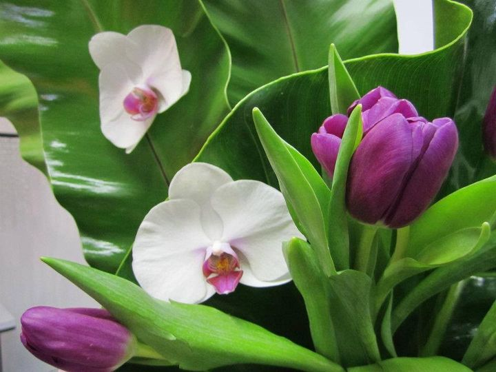 Tmx 1451951112003 1207493815088655827455374498690362895089149n White Plains, NY wedding florist