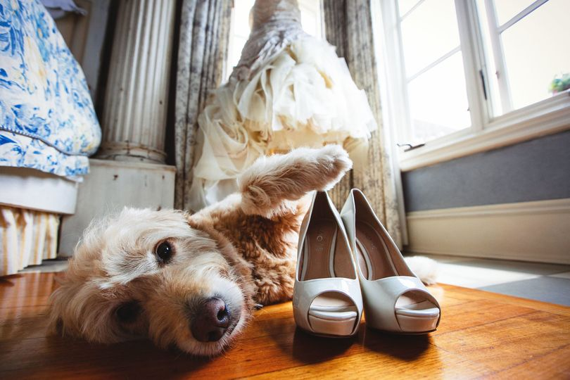 Pets at weddings are genuis!