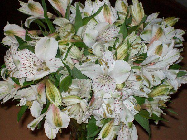 Tmx 1248349580193 Flowers2009027 Rockville, District Of Columbia wedding invitation