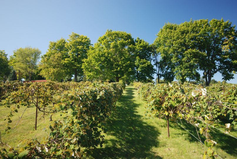MHCC's manicured grounds, complete with picturesque vinyard on site