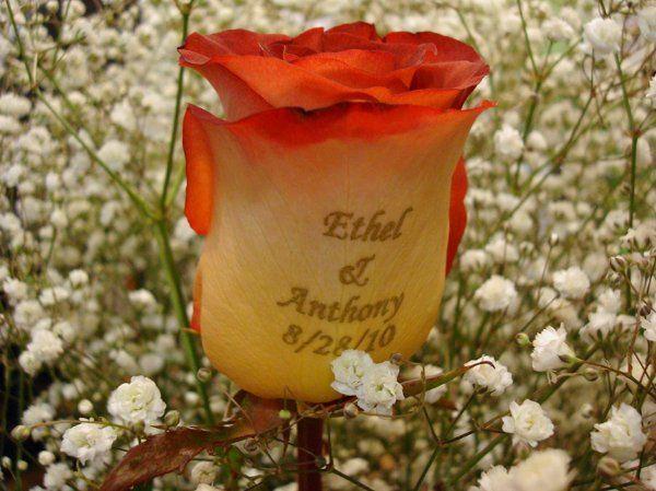 Tmx 1320164500788 DSC01402 Babylon wedding florist