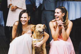 Ivory Hound Weddings