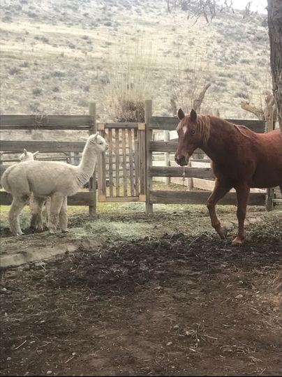 Tygh Ridge Ranch horse corrals