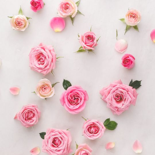 Rose buds to Gardens