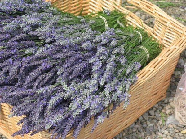 Cape Cod Lavender Farm - Venue - Harwich, MA - WeddingWire