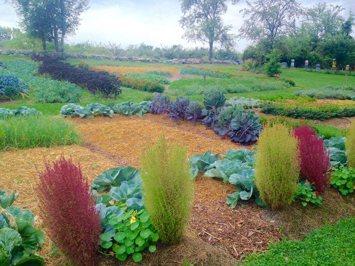 Many beautiful gardens