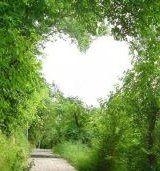 loveinthetrees