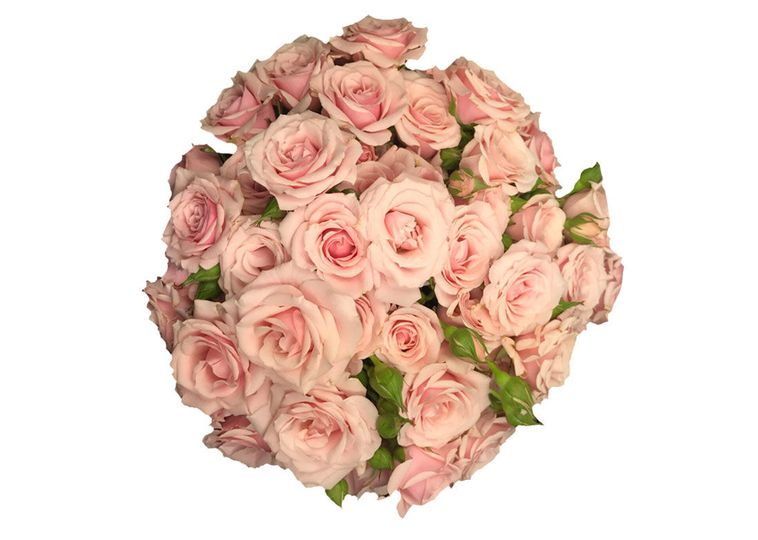 cccb61829431fcec 1529529314 966c4981107c6f54 1529529311704 14 Baby Pink Majolik