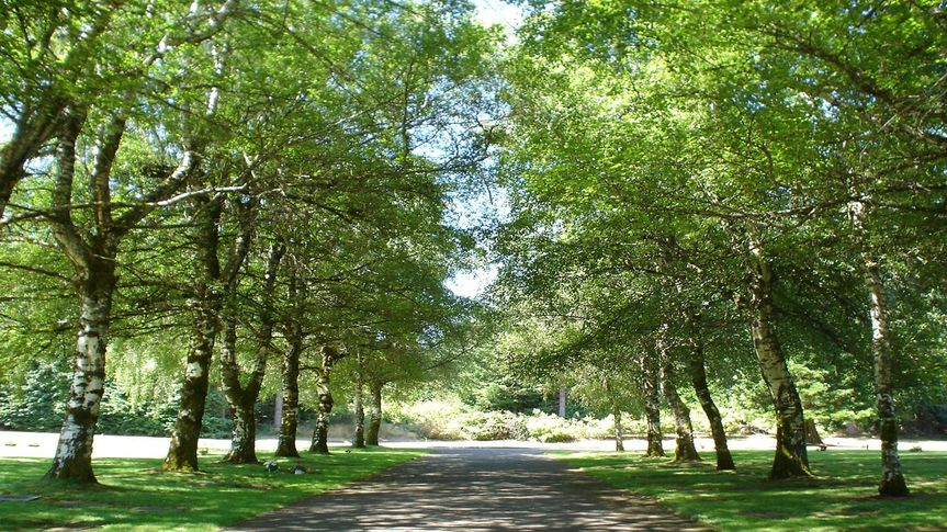 Birch tree lane