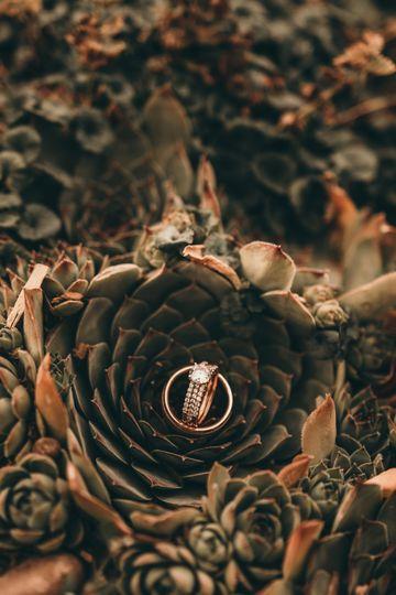 Suculant ring shot
