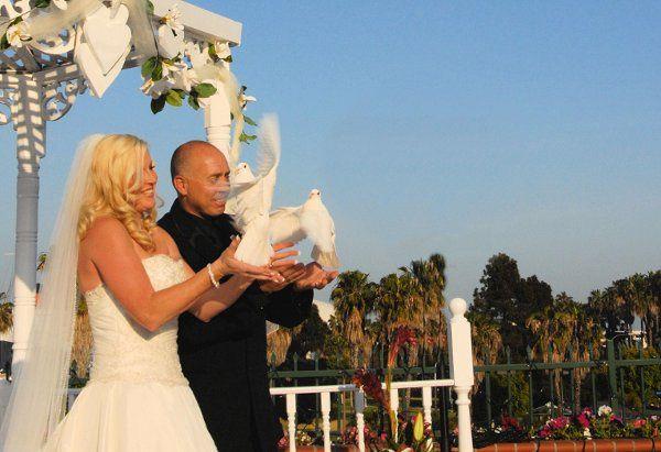 white dove release oc