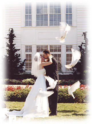 Tmx 1265514556809 Weddingocdoves222 Huntington Beach wedding rental