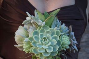 Succulent by Design