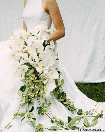Tmx 1280594895618 A99587fal02orchidcvrxl Washington wedding florist