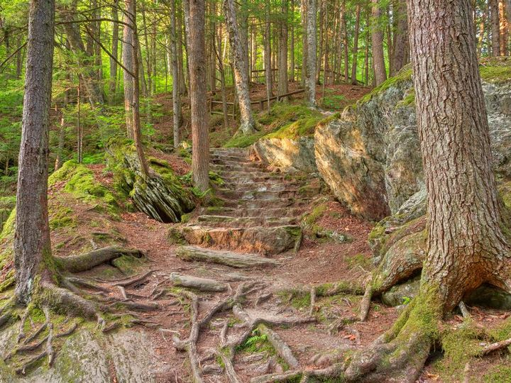 Tmx Green Mountain Forest Trail By Somadjinn Daubgzx 51 1987195 159985409361598 Sheldon Springs, VT wedding travel