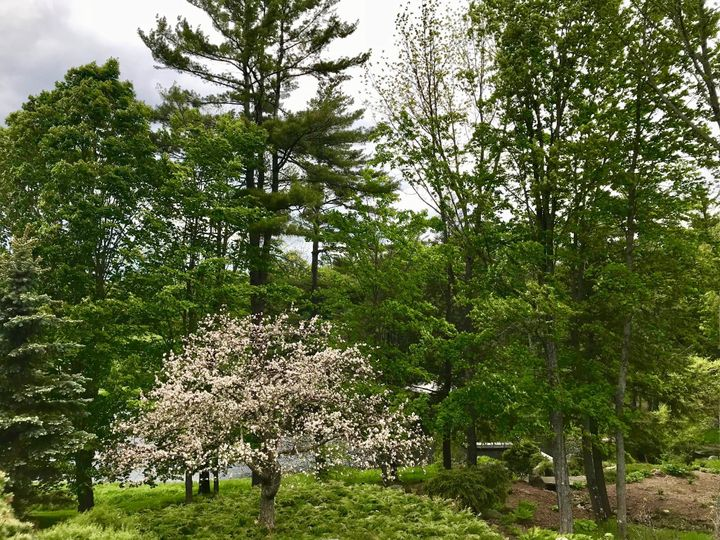 Tmx Flowering Tree 51 1951395 158292455139619 Plainfield, NH wedding venue