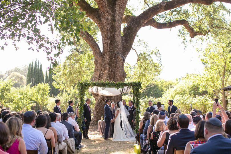 Campovida Oak Tree