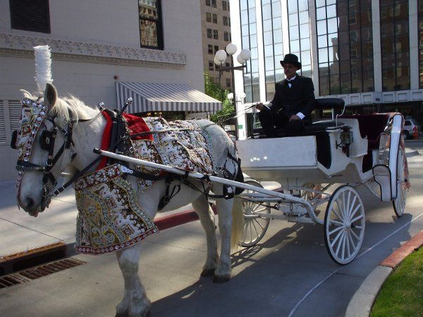 East Indian Baraat Horse Carriage for the Groom