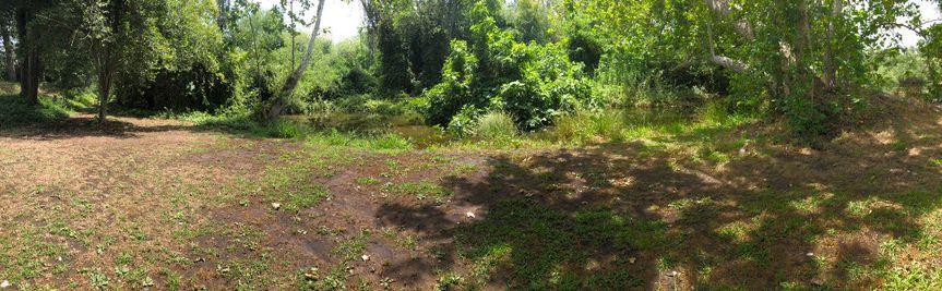 Creek Yard Views