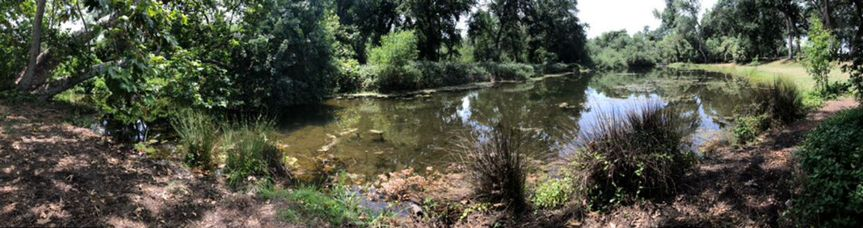 Pond Patio Views