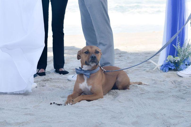 Ring Dog on Duty