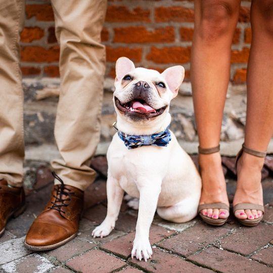 French Bulldog Engagement Sess