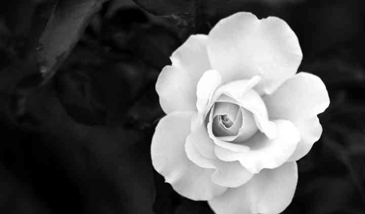 Porcelain Rose Productions