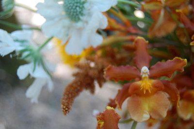 themonkeyflowergroupfallorchid