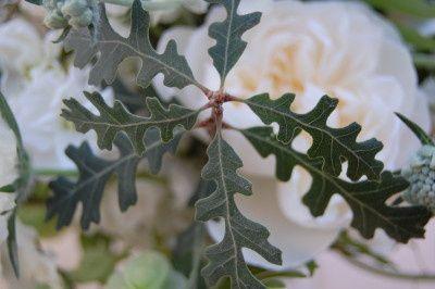 themonkeyflowergroupoakandgardenrose