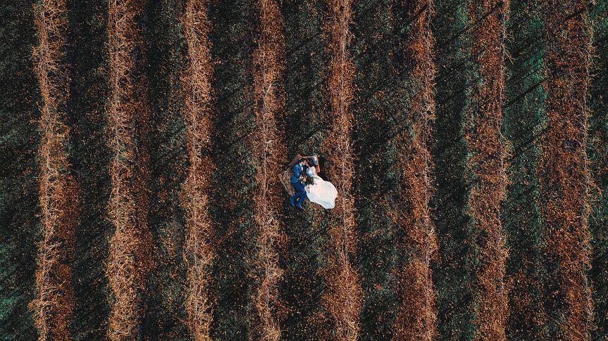 Aerial shot of the vineyard