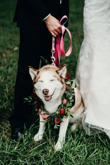 Furry friend for ceremony