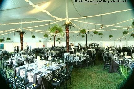 Tmx 1234385225706 EE ZEBRA Stoughton, MA wedding rental
