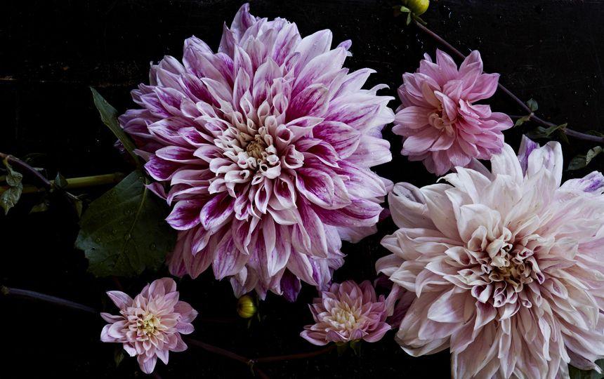 141006taprootflowers156