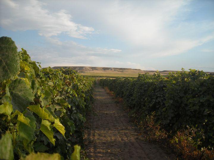 same vineyard at 10 years