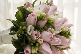 Mokara Fine Flowers
