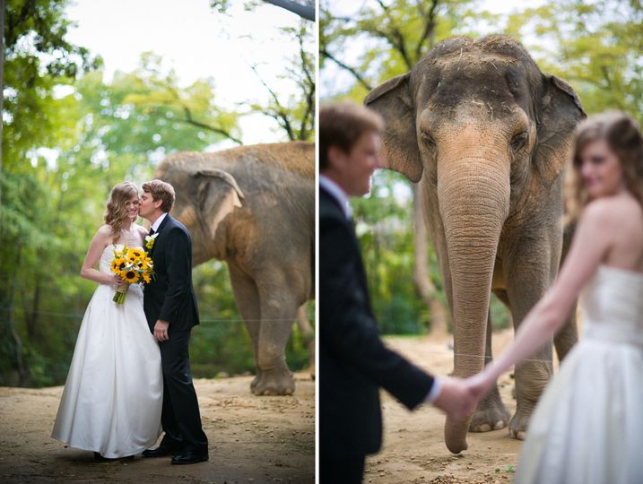 cincinnati wedding photographer cincinnnati zoo2