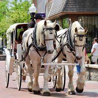 Tmx Rides In Winchester 51 5916 Front Royal, VA wedding transportation