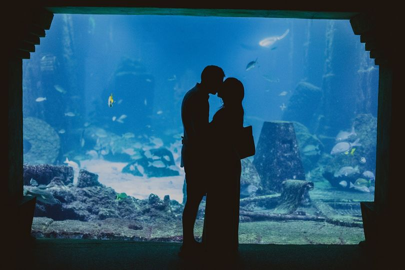 An aquarium shoot