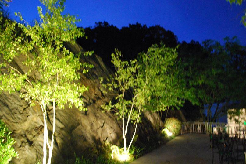 Uplighting on trees