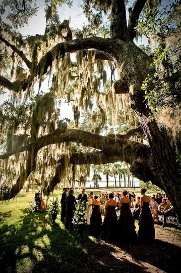 Jekyll Island live oak tree draped wedding ceremony