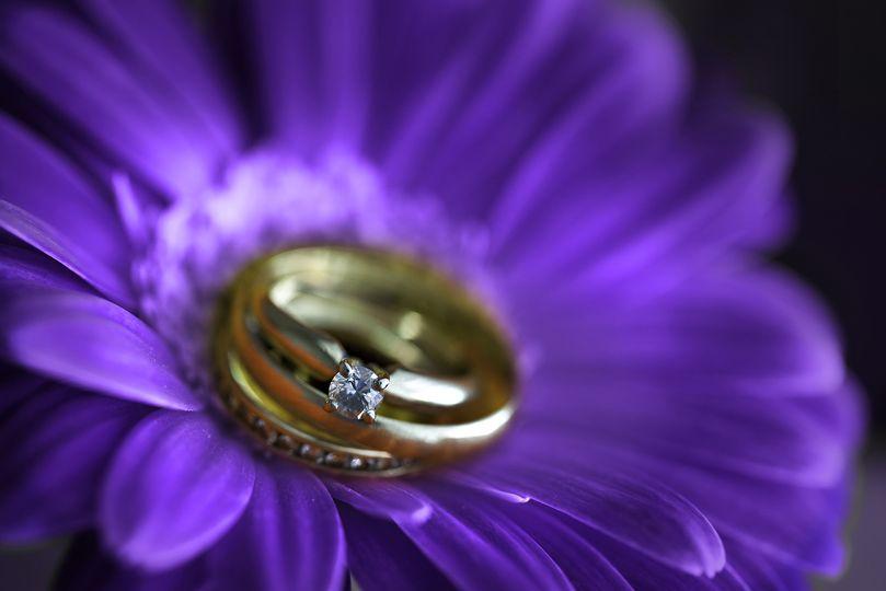 rings gerber daisy full res