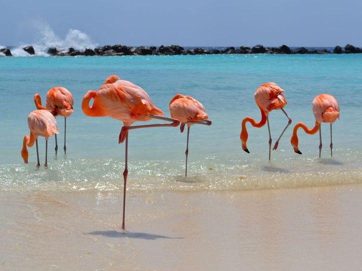 Tmx Renaissance Flamingos 51 683726 158068387988315 Somerville, MA wedding planner
