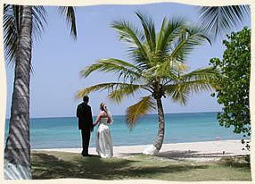 Holding hands under a palm tree at Bluebeard's Beach, St. Thomas.