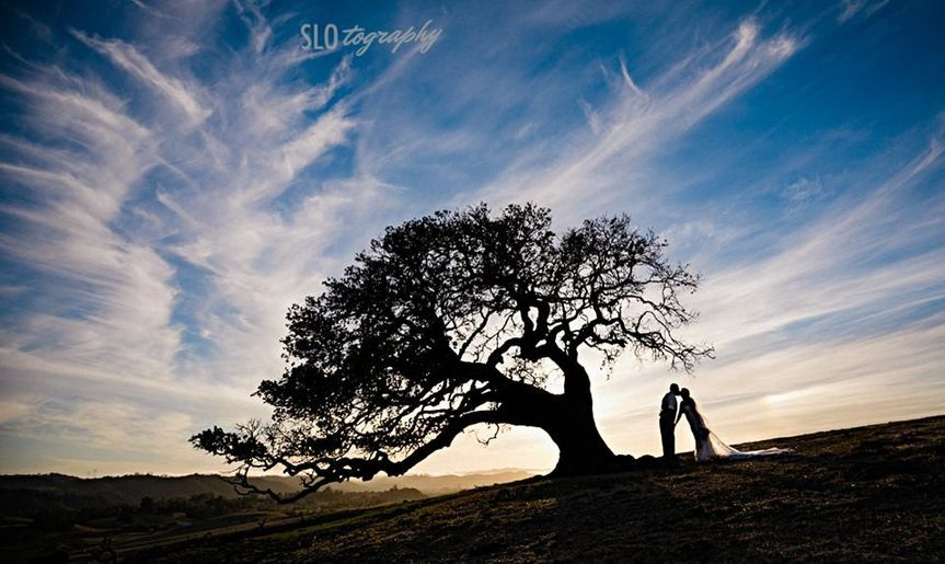 Sunset with an oak tree