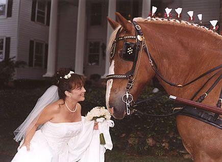 Tmx 1456936111846 Barneybride Brandy Station wedding transportation