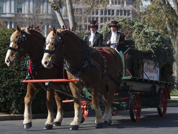 Tmx 1456936212673 White House 3 Brandy Station wedding transportation