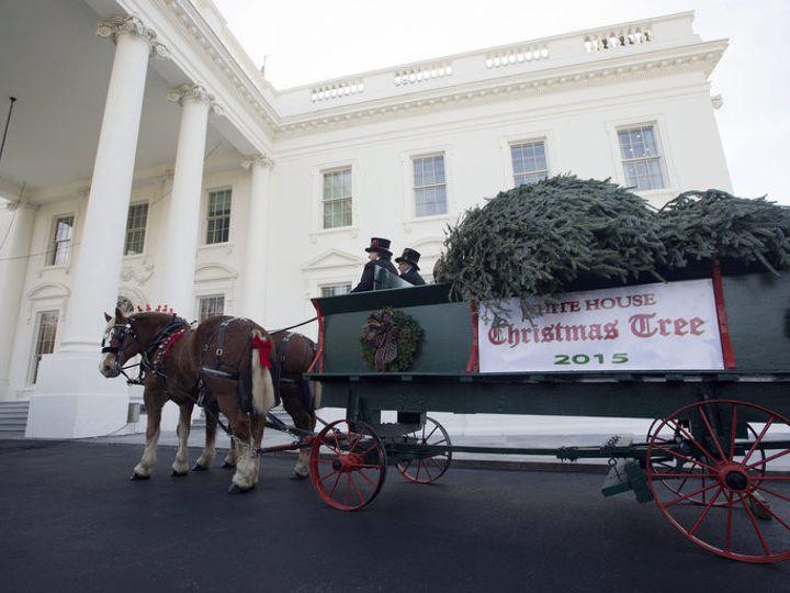 Tmx 1456936946980 2015 White House Tree In Front Brandy Station wedding transportation