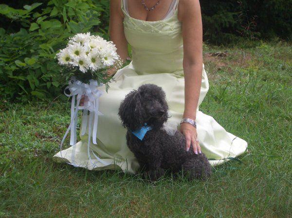 Tmx 1299933706052 WeddingBouquet70SteinYourFloristCo. Philadelphia wedding florist
