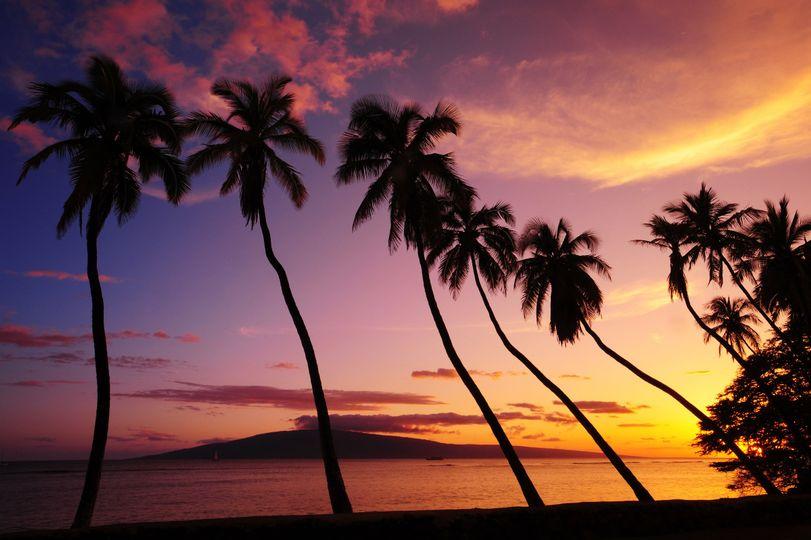 hawaiimauipalms050708dsc0451